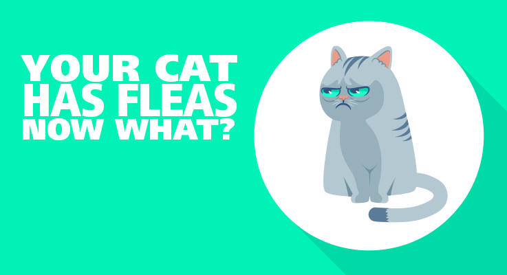 Sad cat with fleas