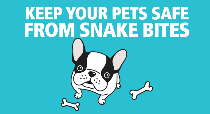 Are you protecting your dogs from snake bites?